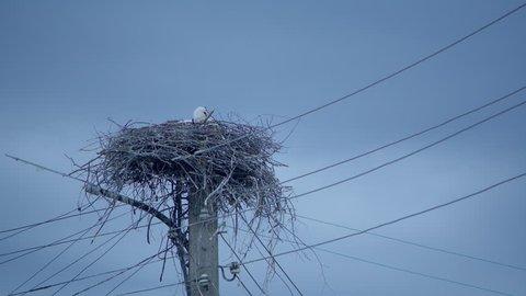 Baby stork in it's nest looking around 4K UHD ProRes 422