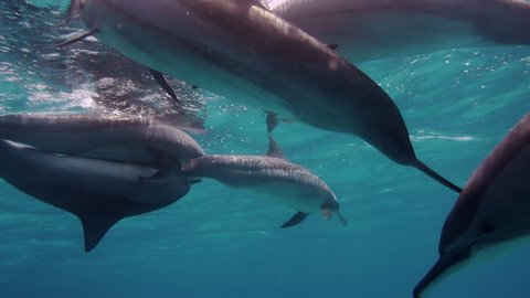 Cute dolphins flock, close up shot