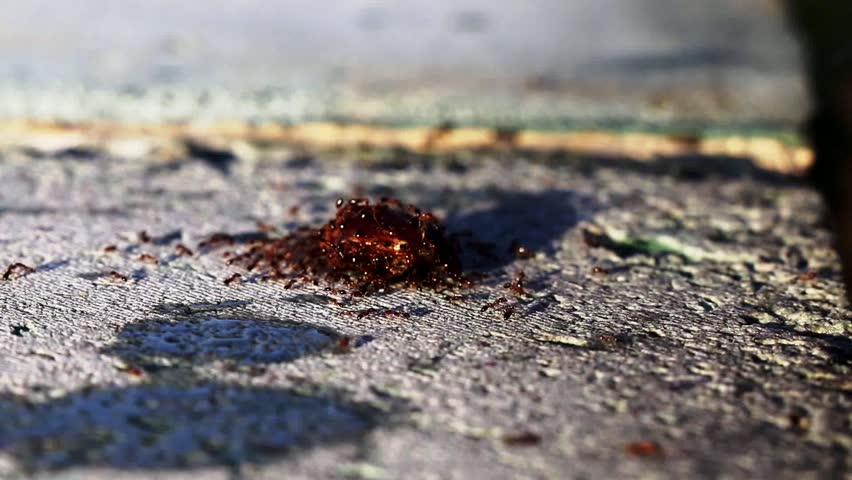 ant ants marching animal insects teamwork working bug