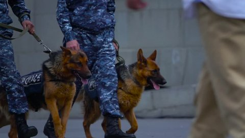 Walking policemen with their police dog. slow motion 250fps. Yerevan, Armenia