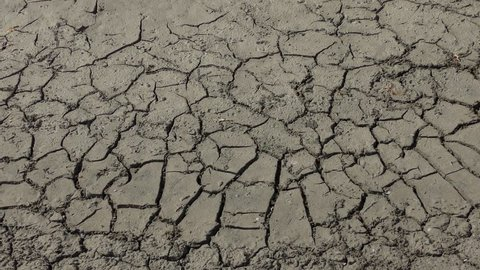 Drought: dry cracked earth, wide shot.