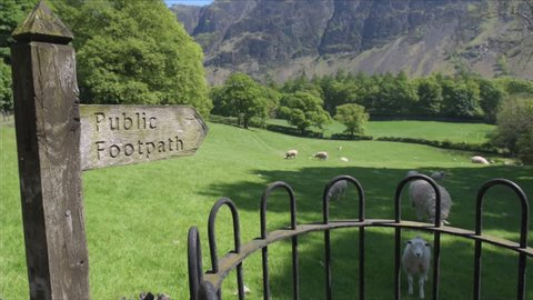 Sheep and lambs in a meadow beneath hills in the Wasdale valley with entrance to a public footpath via an old iron gate in the lake district national park, cumbria, England, Uk.