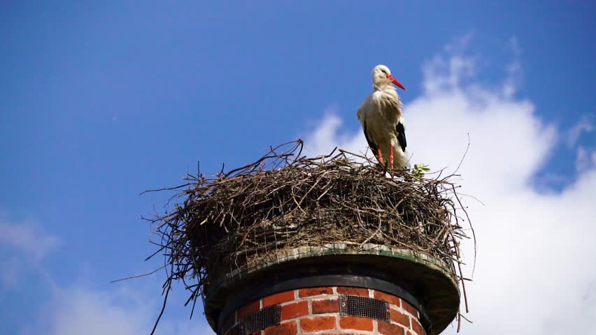 Stork on nest breeding chicks on the top of a chimney in the center of Amsterdam