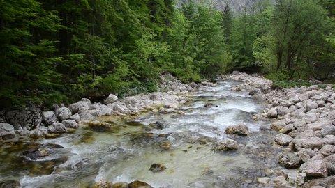 Mountain river Sava Bohinjka, Savica, Slovenia. Beautiful River with crystal clean water near lake Bohinj. Triglav National Park, Julian Alps. Sava Bohinjka is a headwater of the Sava River