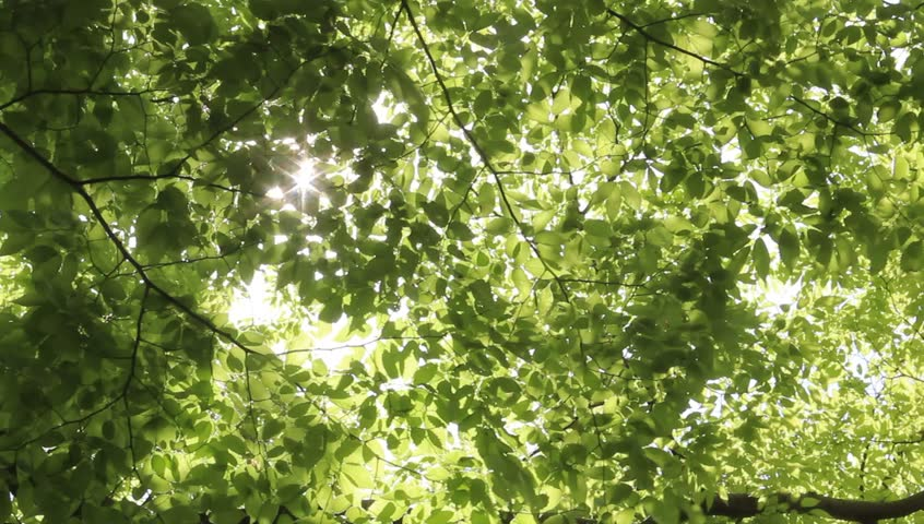 Sunlight filtering through the leaves of trees | Shutterstock HD Video #1011795131