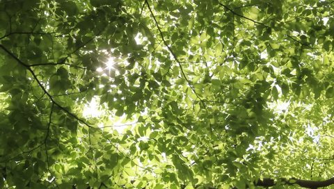 Sunlight filtering through the leaves of trees