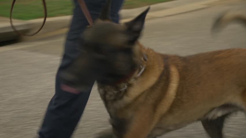 A police walks with a K9 dog to inspect for possible drugs or explosives.