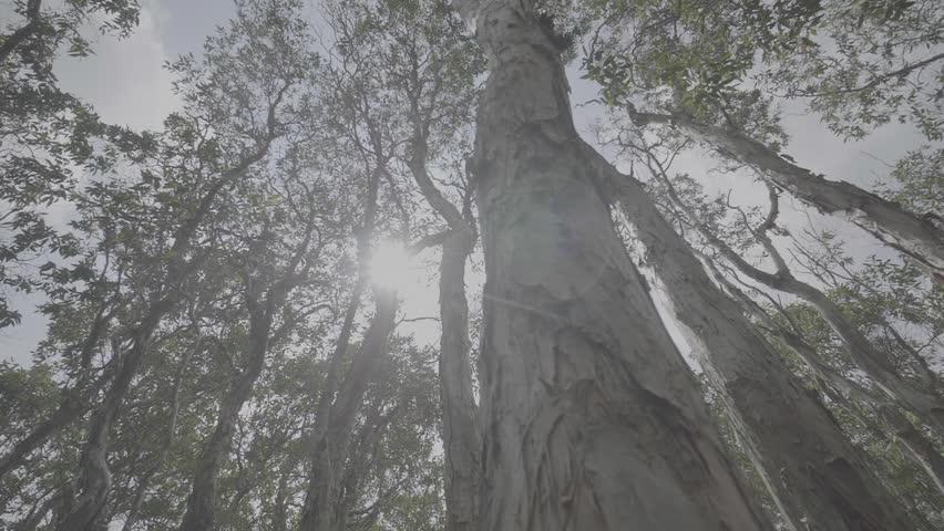 Mangrove forest in Terengganu, Malaysia | Shutterstock HD Video #1012014461