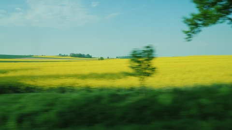 View from the car window on the fields of yellow rapeseed - a source of raw materials for biodiesel