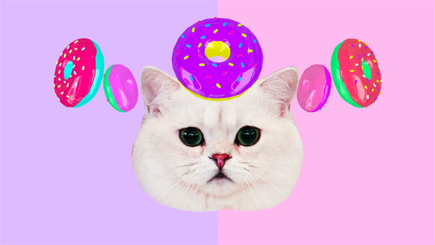 Motion minimal design art. Funny cat and donuts