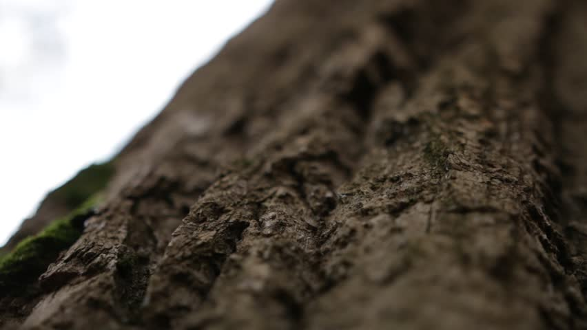 tree bark. woody background | Shutterstock HD Video #1012636091