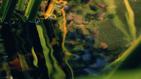 Tadpoles in lake in beautiful sunny day.
