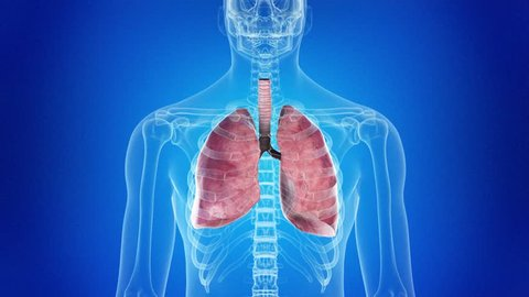 medical 3d animation of the human lung