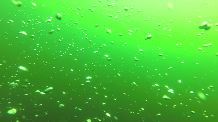 Bubbles of air rise to the surface of the sea. | Shutterstock HD Video #1012858721