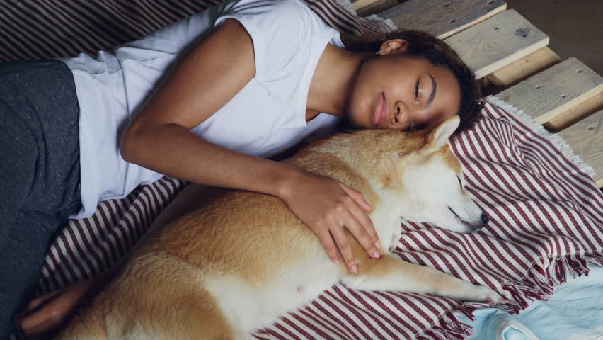 Beautiful African American teenager and adorable pet dog are sleeping together on wooden bed, girl is wearing comfortable pajamas and hugging animal. | Shutterstock HD Video #1012914701