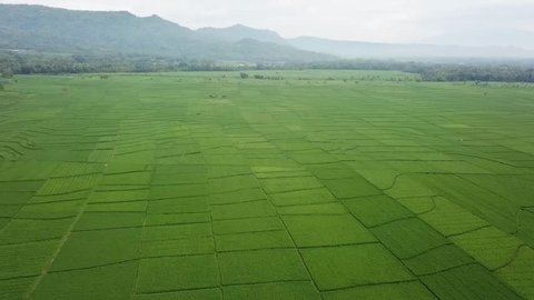 Amazing views, namely the green rice field was in Kulon progo yogyakarta