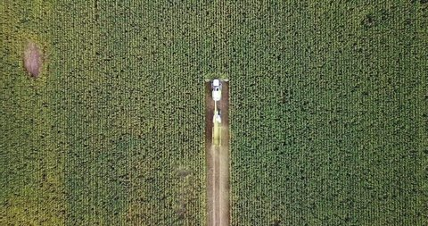 Corn harvesting with machinery from aerial top down shot in autumn
