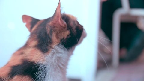 Close up of a cat looking at the camera and mewing in slow motion. Amazing shot captured in a sunny location.
