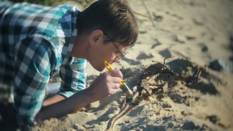 The man is engaged in excavating bones in the sand, Skeleton and archaeological tools. 4k