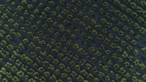 4K Aerial of Arizona Citrus Orchard, With Spin