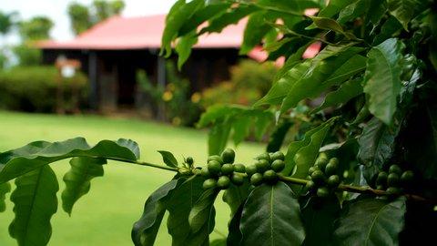 Kona Coffee Living History Farm in Kealakekua, Hawaii