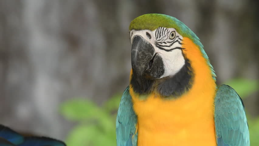Birds are confined in the zoo. Birds lacking freedom to live in the wild, Macore Bird Hold on Branch.