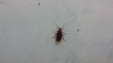 cockroach on wall