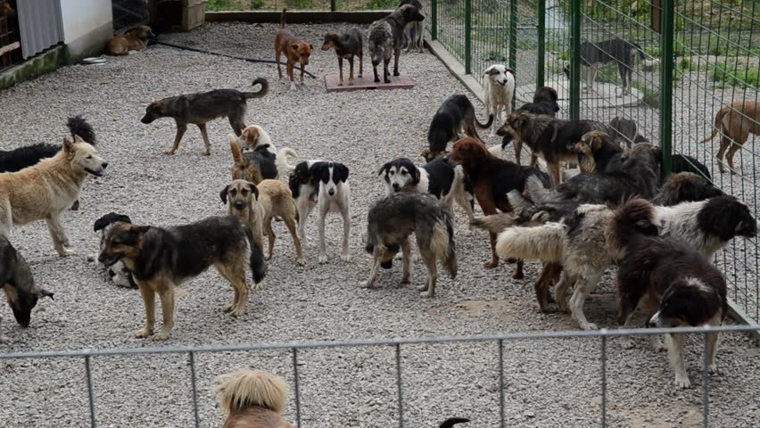 Unwanted and homeless dogs barking in animal shelter. Asylum for dog. Stray dogs in an iron cage. Poor and hungry street dogs and urban free-ranging dogs. Feral dog in prison.