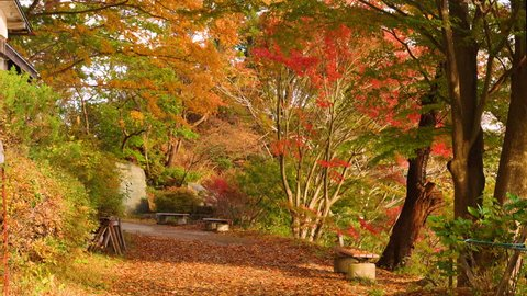Autumn Landscape - Park of maple trees with footpath in a windy day.
