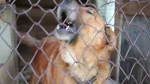 The dog barks in the aviary. A large brown dog bows behind a metal net on passing people