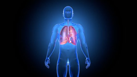 Anatomical animation of breathing Lungs
