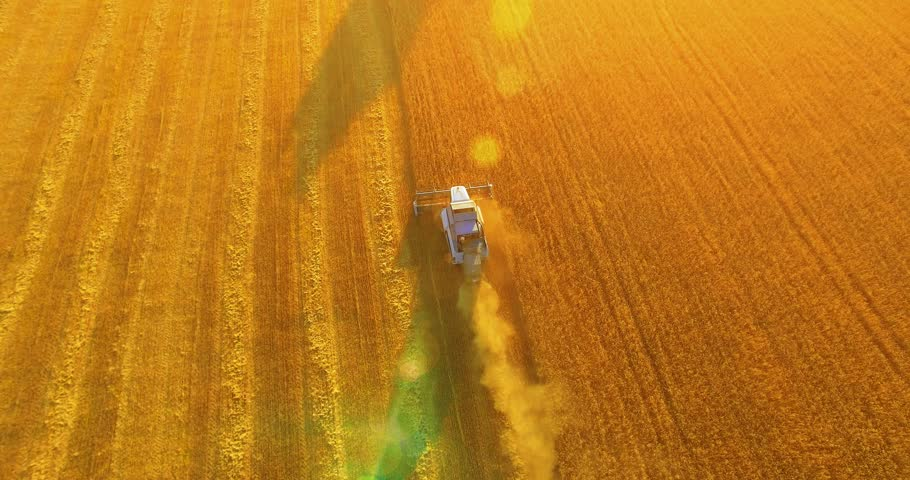 UHD 4K aerial view. Low flight over combine harvester gathers the wheat at yellow rural field. Sunny summer day. Sun rays on horizon. Horizontal movement. | Shutterstock HD Video #1014655511