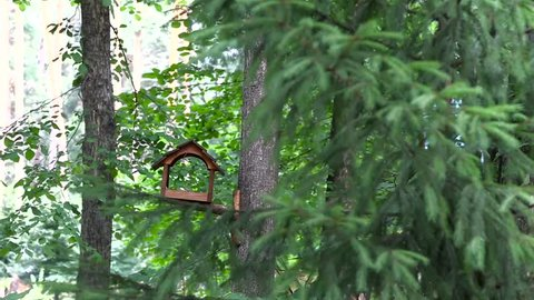 The bird flew to the birdhouse, saw the food, ate and flew away. The bird eats food from the birdhouse.