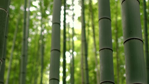 Close-up Elevating Shot of the Beautiful Bamboo Forest with Leaves and Sun Shining Through the Tree Tops. ....