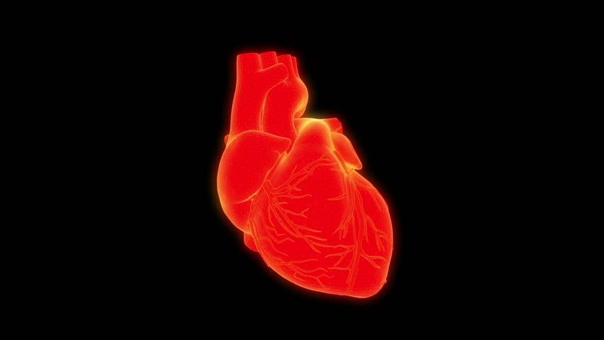 Human heart scan. Digital 3d loopable animation on black background. Futuristic element for science or medical interface. | Shutterstock HD Video #1014832741