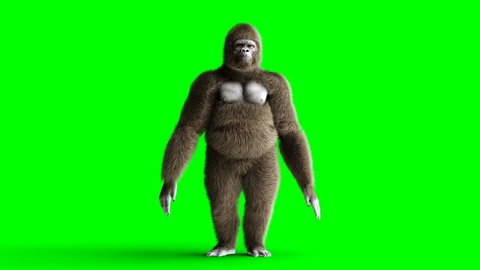 Funny brown gorilla dancing. Super realistic fur and hair. Green screen 4K animation.