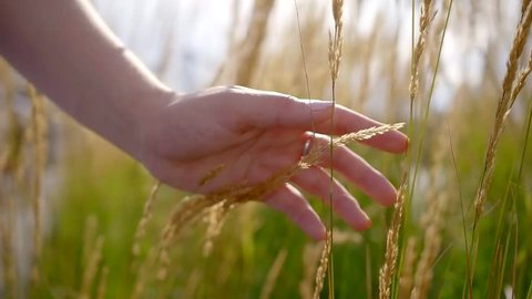 Couple holding hands. close-up of people's hands gentle touch in ears of grass