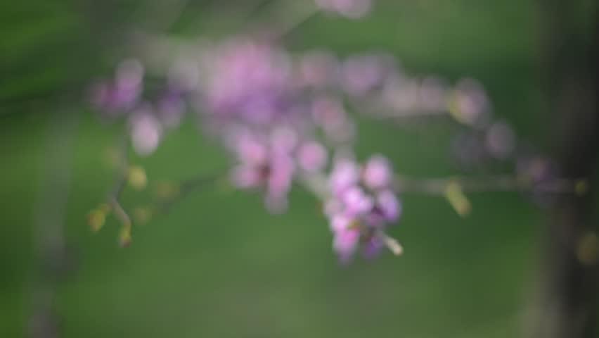 Blossom In Spring | Shutterstock HD Video #1014885241