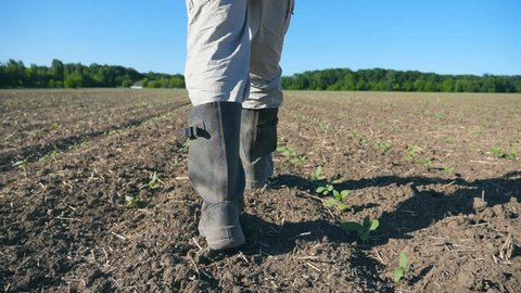 Follow to male farmer's feet in boots walking through the small green sprouts of sunflower on the field. Legs of young man stepping on the dry soil at the meadow. Low angle view Close up Slow motion