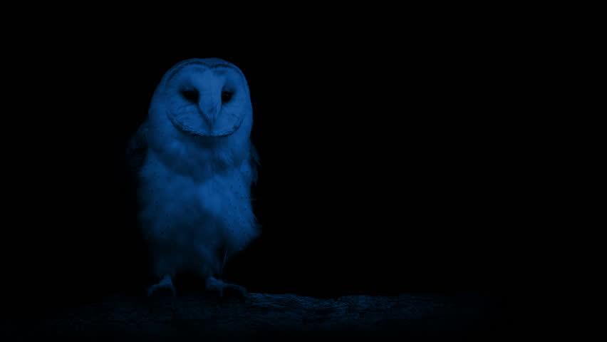 Owl In The Dark