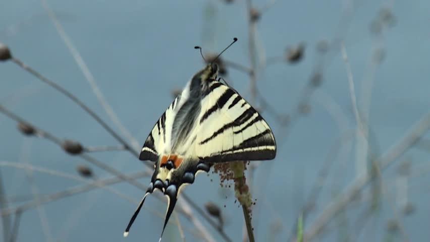 Header of Graphium