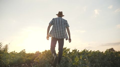 A man is walking along a green field at sunset. Browse agricultural products