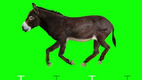 Isolated donkey cyclical running. Can be used as a silhouette. Green Screen.