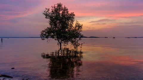 Tropical sand beach with twin trees near sea water on the sunrise at Tanjung Langsat, Johor, Malaysia. Pan right motion timelapse.