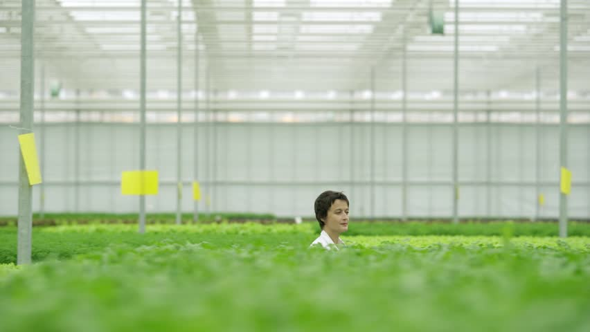 Tracking right shot of female greenhouse technician walking among rows of green plantations and passing by agricultural worker caring for vegetable plants | Shutterstock HD Video #1015483501