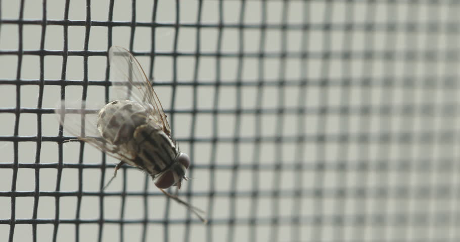 Insect Fly on metal fence