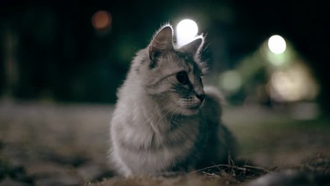The beutifull cat hunts the mouse at night, 4k