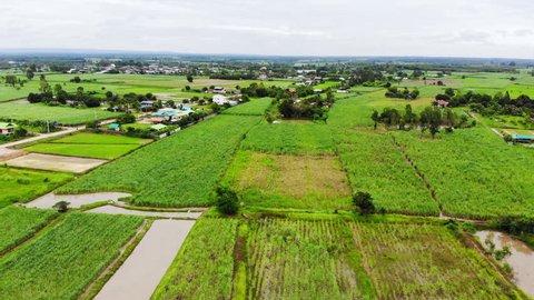 Aerial drone shot of agriculture field in Thailand, sugar cane field, rice field, cassava field
