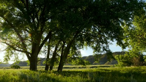 Pan as sun shines through leaves of cottonwood trees next to river