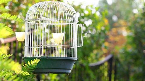 Empty bird cage garden